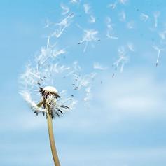 devocional-diario-libre-vivir