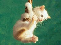 Devocionales-Cristianos-El gato