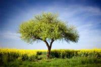 arbol de la abundancia biblia