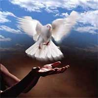 la-paz-de-Dios-paloma-manos
