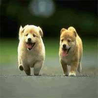 reflexion-cristiana-perritos
