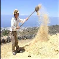 Zarandear-como-trigo-biblia