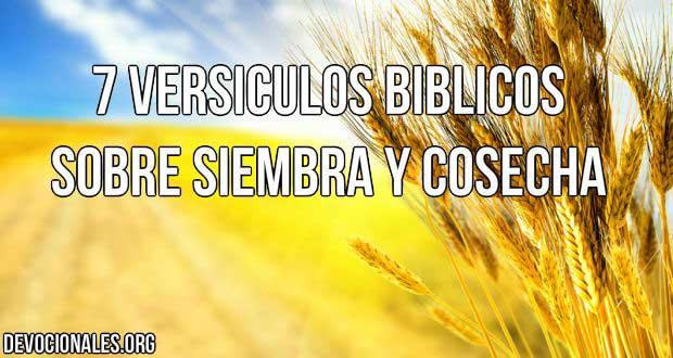versiculos-biblicos-siembre-cosecha.jpg