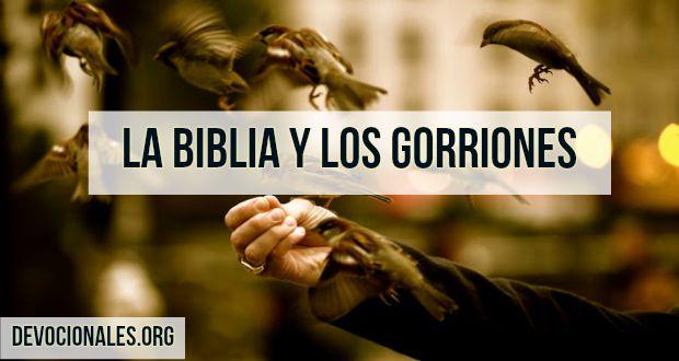 biblia-gorriones-Jesus-pajaritos