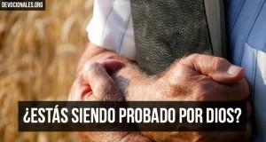 probado-por-Dios-Biblia-2