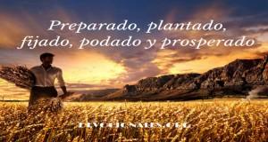 Preparado-plantado-fijado-podado-y-prosperado-2