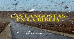 biblia-langostas-Dios-proverbios-4