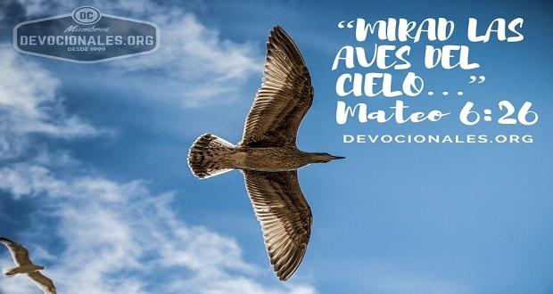 aves-del-cielo-biblia