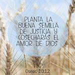 planta-buena-semilla-biblia