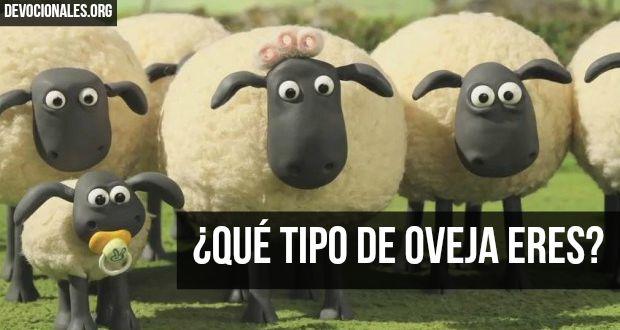 tipos-ovejas-biblia