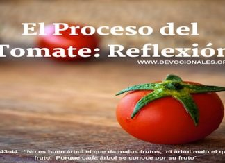 proceso-reflexion-tomate-biblia