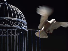 verdadera_libertad