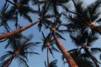 devocional-diario-el-justo-florecera-palmeras
