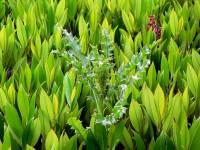 devocional-mala hierba