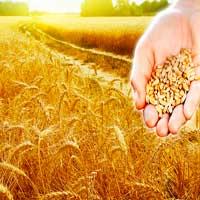 graneros-cosecha-biblia-sembrar