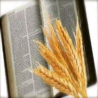 cristiano biblia espiga